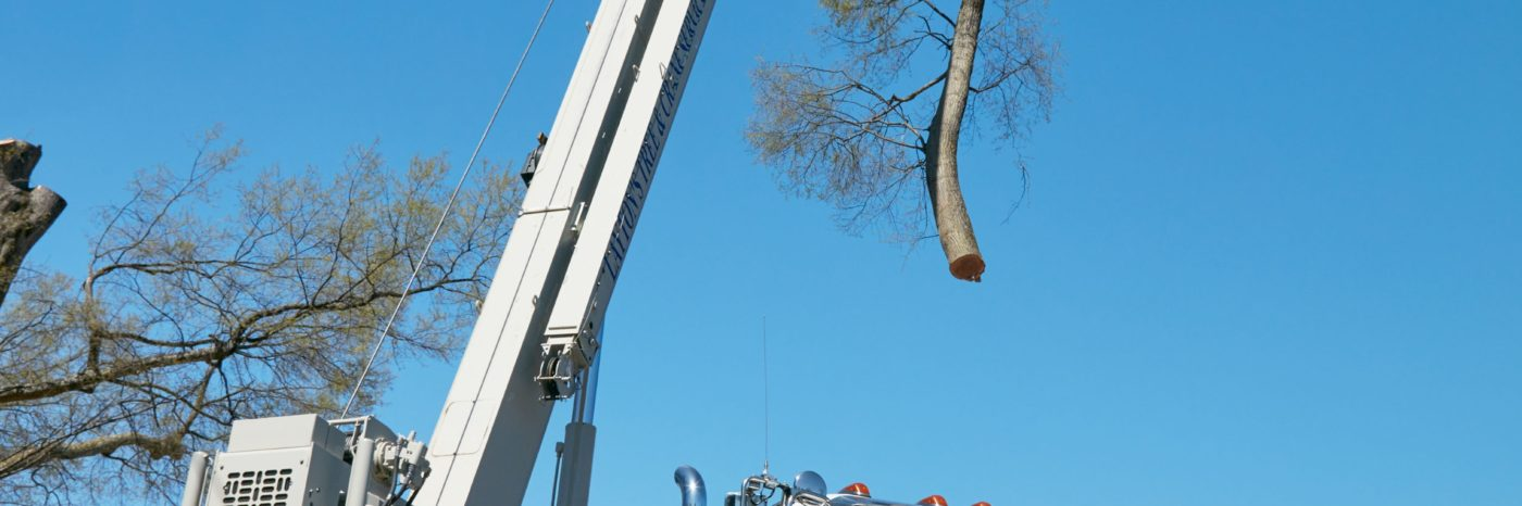 cranes-for-tree-removal